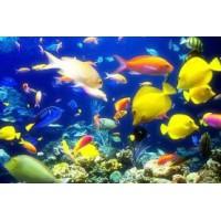 求购海洋生物学实验标本破片切片等实验耗材